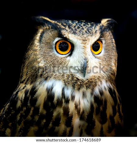 Two Owls On Branch Clip Art Owl Big Eyes Sto...