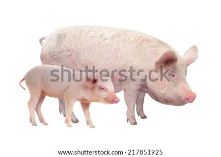 Pig  on a white background - stock photo