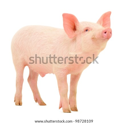 Pink Pig Stock Images Royalty Free Images Amp Vectors