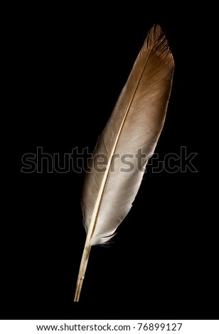 pigeon feather - stock photo