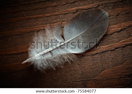 Pigeon feather on the old wood texture. - stock photo