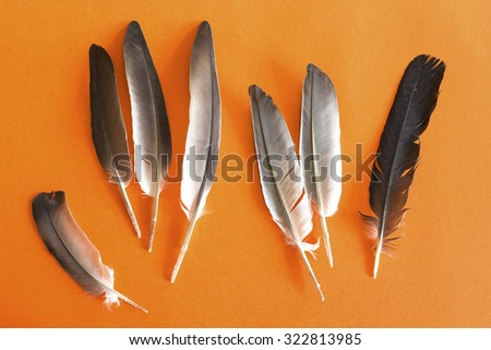 Pigeon feathers on an orange background. - stock photo