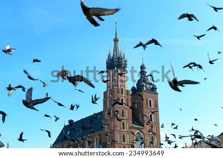 Pigeon flying above St. Mary's Church at the Main Market Square in Krakow, Poland.  - stock photo