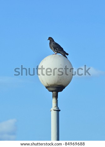 Pigeon on street light against a blue sky background - stock photo