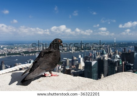 Pigeon on the Empire State Building - stock photo