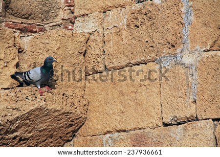 Pigeon on wall ruins in Caesarea Maritima National Park, a city and harbor built by Herod the Great about 25-13 BC. The archaeological ruins are on the Mediterranean coast of Israel. - stock photo