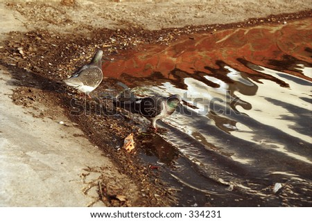 pigeons at edge of pond - stock photo