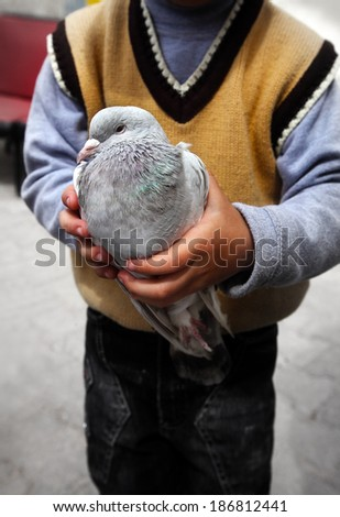 Pigeons in a boys hand
