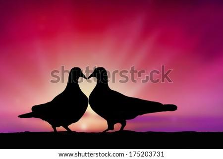 pigeons in love - stock photo