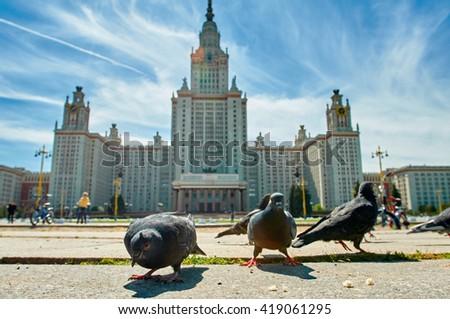 pigeons in Moskow - stock photo