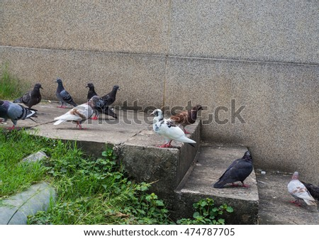 Pigeons in public place. selective focus