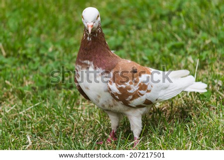 pigeons in the park - stock photo