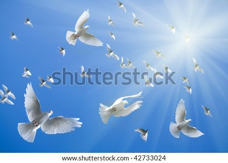 Pigeons in the sky - stock photo