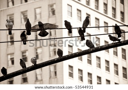 Pigeons on Electric Wire in New York City - stock photo