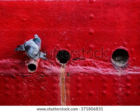 pigeons on red ship hull - stock photo