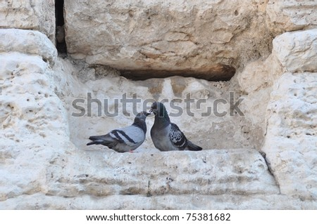 pigeons on the Western Wall - stock photo
