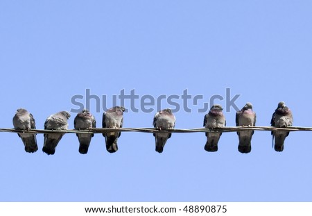 Pigeons warming themselves in the spring sun, sitting on the wire. - stock photo