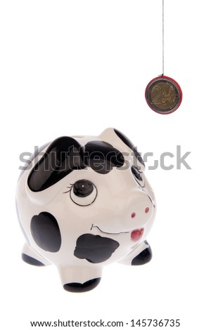 Piggy bank with black and white cow spots, looking upwards to a Euro coin and isolated in white background from the right side - stock photo