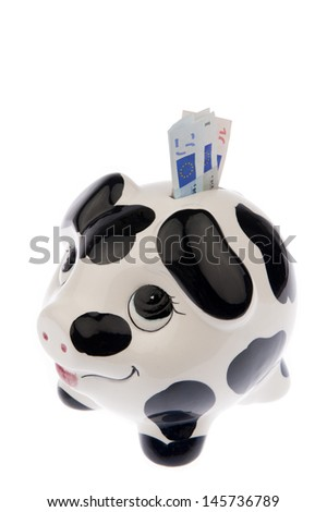 Piggy bank with black and white cow spots, looking upwards with a variety of Euro banknotes in its slot, isolated in white background and viewed from the left - stock photo