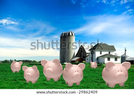 Piggy banks in pasture on farm under blue sky. Funny humor or savings concept. - stock photo