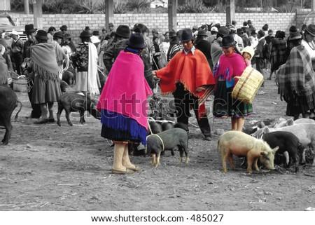 Pigs for Sale - Saquisili, Ecuador - stock photo