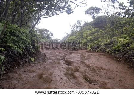 Pihea Trail, Kokee State Park, Kauai, Hawaii - stock photo
