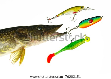 Pike and fishing lures. White background