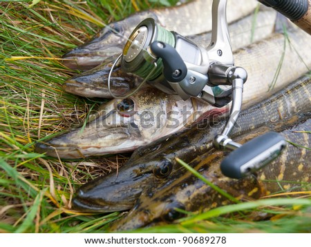 Pike and spinning reel - stock photo
