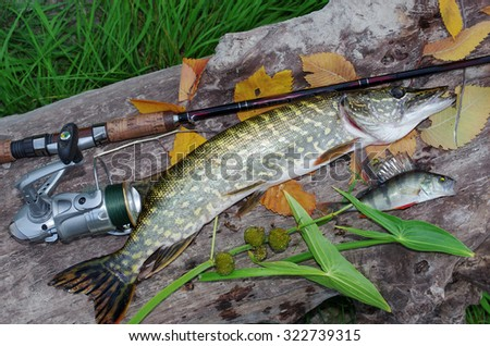 Pike and spinning rod. - stock photo