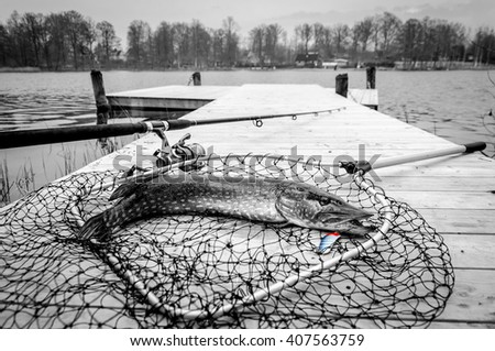 Pike fishing trophy in monochrome - stock photo