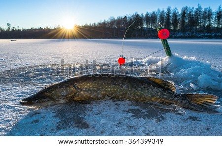 Pike ice fishing in Sweden - stock photo