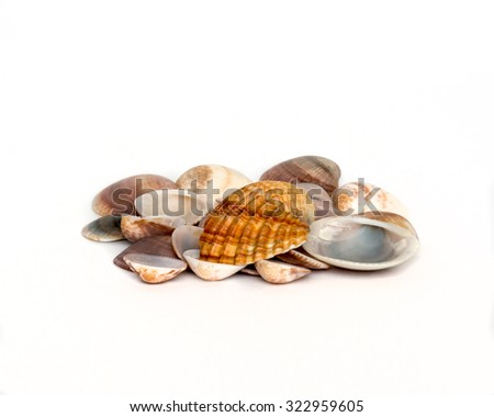 pile different colored shells - stock photo