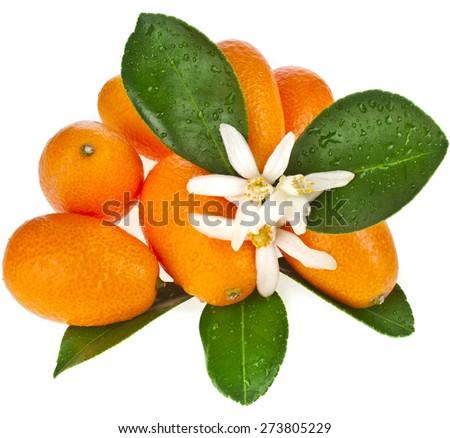 Pile heap of kumquat citrus fruit close up isolated on white background - stock photo