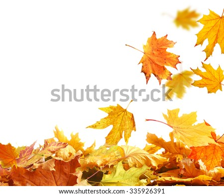 Pile of  autumn  leaves, isolated on white - stock photo