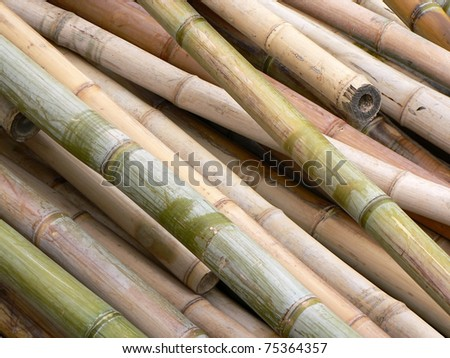 Pile of bamboo stalks