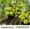 Pile of coconuts with bunches - stock photo