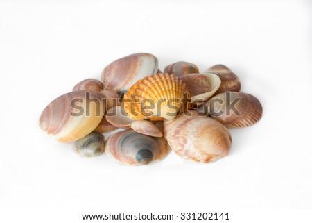 Pile of colored seashells on white background - stock photo