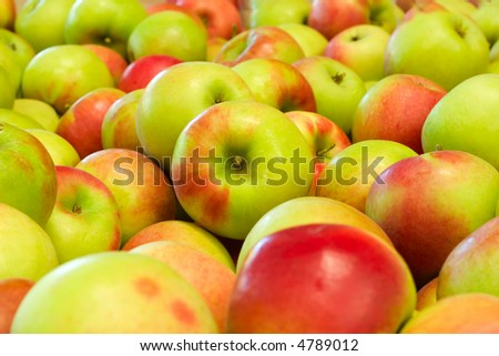 Pile of colorful organic apples during harvest time. Shallow depth of field. - stock photo