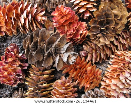pile of colorful pinecones - stock photo