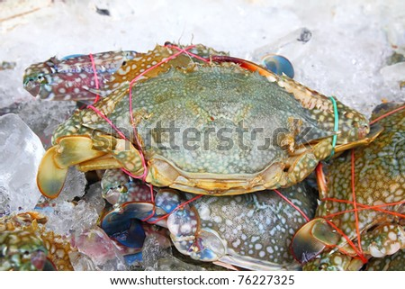 Pile of crabs fresh caught In the Market. closeup Useful for design-works. - stock photo