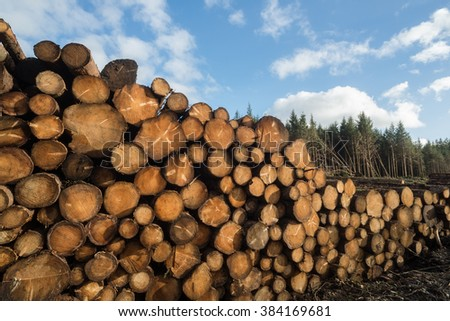 Pile of cut forest tree logs background - stock photo