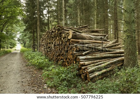 Pile of cutted trunks in the forest for firewood