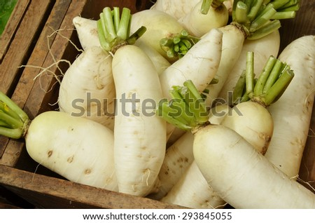 Pile of daikon radishes   for sale at market - stock photo