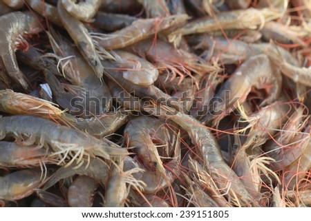 Pile of fresh shrimps for retail sale in local market. Freshly caught shrimp. - stock photo