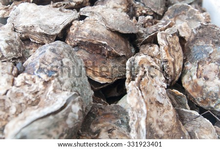 Pile of fresh water oyster for sale at a wet market in kota Kinabalu, Sabah, Malaysia.  - stock photo