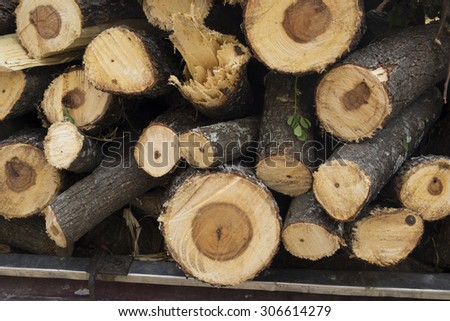 Pile of freshly cut tree logs under bright sunlight show wood texture. - stock photo