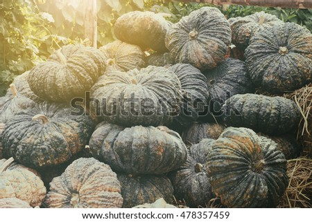 pile of green pumpkins with lighting flare on the straw, retro toned