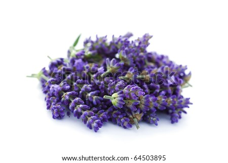 pile of lavender flowers on white background - flowers and plants