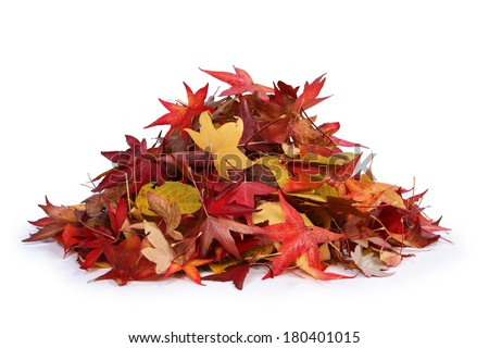 Pile of leaves - stock photo
