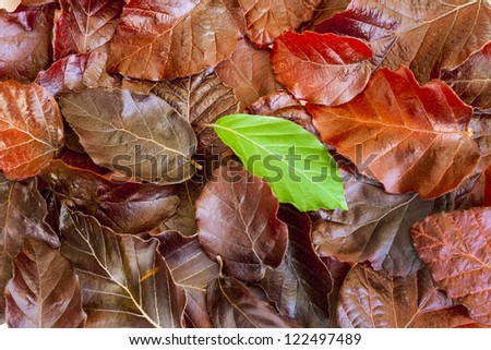 pile of leaves, one standing out from the crowd - stock photo